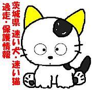 【茨城】迷い犬・迷い猫情報