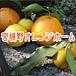 宮城野オレンジホーム