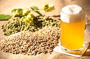 麦の味がするビールが好きだ