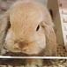 ウサギ愛好家♪♪