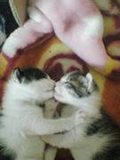 猫の出産から育児の記録です☆