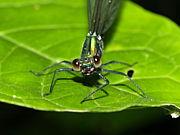 神奈川県の昆虫