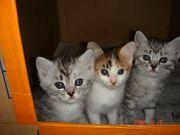 猫-我が家のペット達