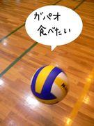 土間☆VOLLEY BALL GIRLS(仮)