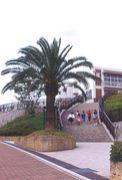 桂坂小学校