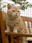 シャープのエコのCMの猫