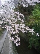 京都の文化を学ぶ会