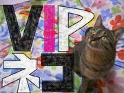 ◆VIPネコ集団◆