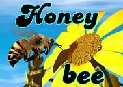 †Honey bee†
