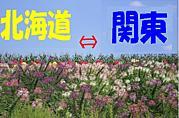 北海道⇔関東(東京/神奈川etc)