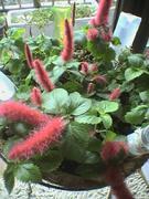 お家でよく育つ丈夫な緑&お花