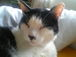 ☆我が家の猫は白と黒★