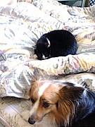 I Love Cat & Dog
