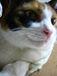 猫のフットスタンプ