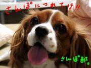 犬散歩部in福岡