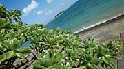 マニアックな植物の紹介板