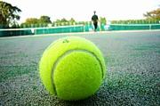 カニテニス。