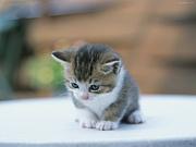 野良猫は飼い猫っ★