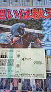 ノンフーズ競馬