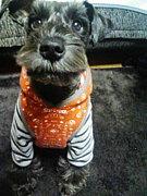DOG CHUM.
