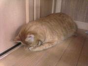 猫大好き!