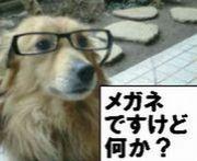 メガネですけど何か?