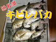 浜名湖キビレ釣り