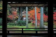 京都の紅葉狩り