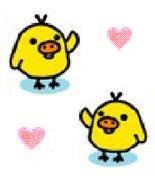 インコ ♡ カップル