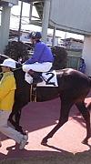 日本全国競馬