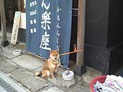 twitter #kawagoe 川越