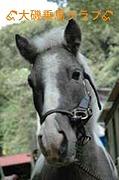OISO乗馬クラブ