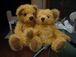 Teddy Bear in shanghai