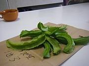 シカクマメ(四角豆)