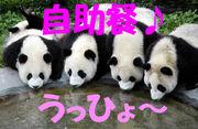 中国語でしゃべろう会大阪ミナミ