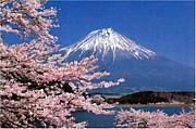 「転勤族の妻の会」静岡県支部