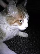 猫カフェに憧れる(^・x・^)