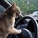 運転しながら独り言