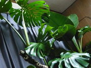 ★観葉植物●In door green★