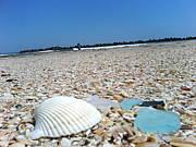 外房の海でゴミ拾いを楽しむ会