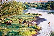 人と馬のための自然環境保護