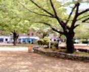 堀江公園 友の会