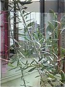 観葉植物 冬の陣 会津編