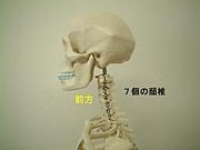 頚椎症(頚椎症性神経根症)