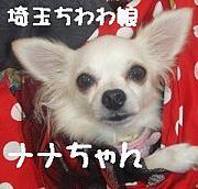 【埼玉】 ちわわ娘 【所沢】