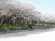 桜ヶ丘北小学校