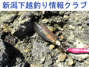 新潟下越☆釣り☆情報クラブ