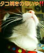 関西弁が好き!!!