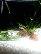 熱帯魚*水槽ガーデニング