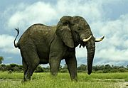 アフリカ動物観察隊